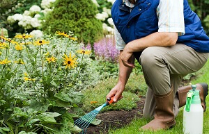 Lawn Care: Practical Guide For Seeding New Lawns