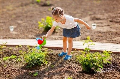 Lawn Care Tips on How To Save Water in Your Lawn
