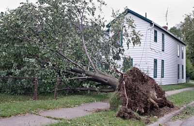 Why You Need A Tree Removal Service After A Storm