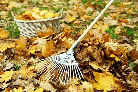 7 Fundamental Lawn Maintenance Projects for the Fall
