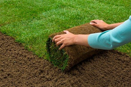 The Best Ways to Deal with New Sod Lawns