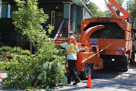 All About Tree Removal Cost