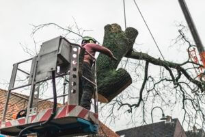 Tree Removal Conway