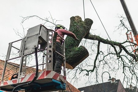 How Professionals Compute Tree Removal Costs