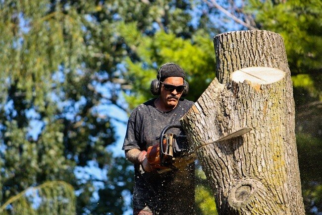 Choosing The Right Tree Removal Service