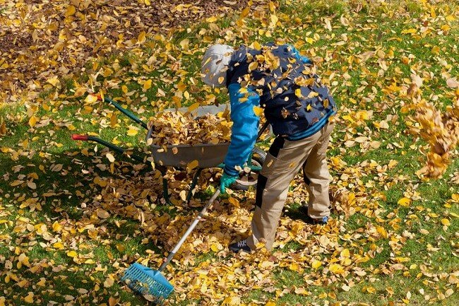 Lawn Care Tips For Every Season