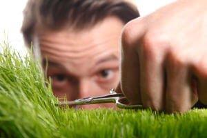 lawn care