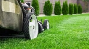 Tips to Keep Your Lawn Healthy