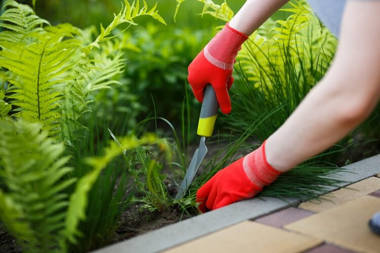 How To Carry Out Weed Control On Lawns