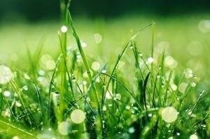 How To Care For Your Lawns After Heavy Rains?