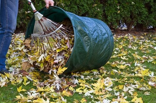 Easy Lawn Care Maintenance This Fall
