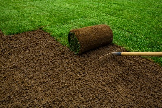 Is Sod or Seed Better For Your Grass Lawn?