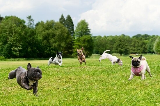 How To Create A Dog Friendly Lawn