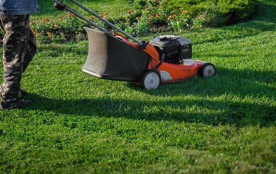 Basics of Lawn Care