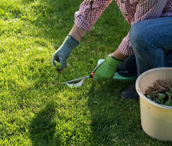 Lawn Care: How To Control Weeds?