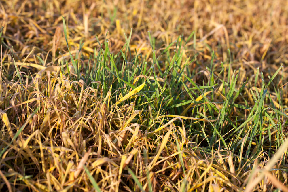Lawn Care and Maintenance During Times of Drought