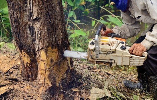 How to know when it's time for tree removal?