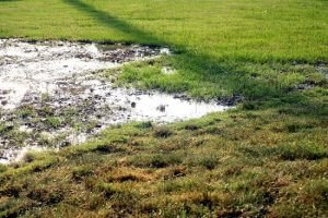 How do you care for your lawn after rain?