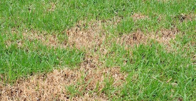 What can you do if your lawn is stressed?