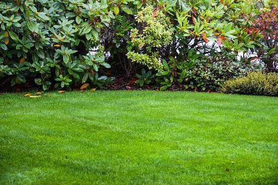 How can you protect your lawn during the summer?