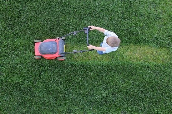 What should you look for in a lawn care company?
